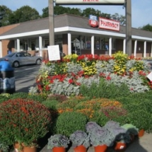 MGC Mum Sale & Fall Planting