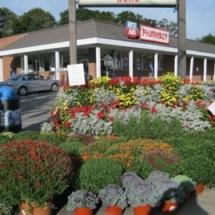 MGC Mum Sale & Fall Planting